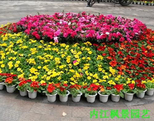 时令花卉造景