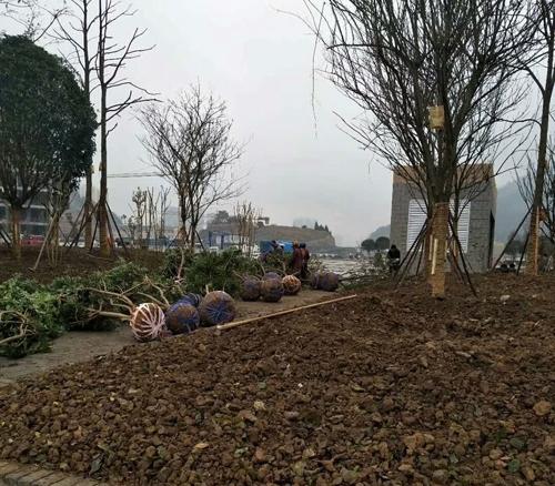 公园园林绿化