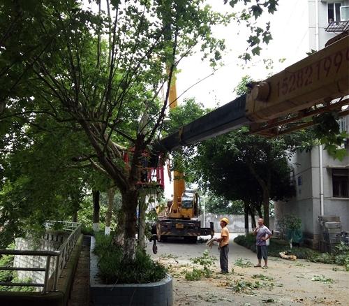 树木修剪工程