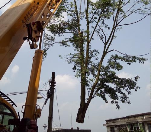 树枝修剪清理