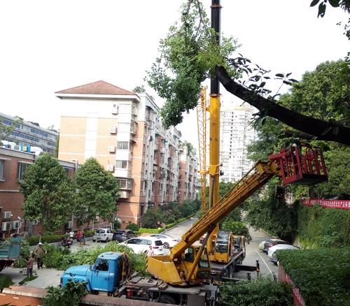 街道树木修剪